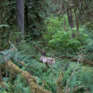 20140814-153242-olympic national park-0417